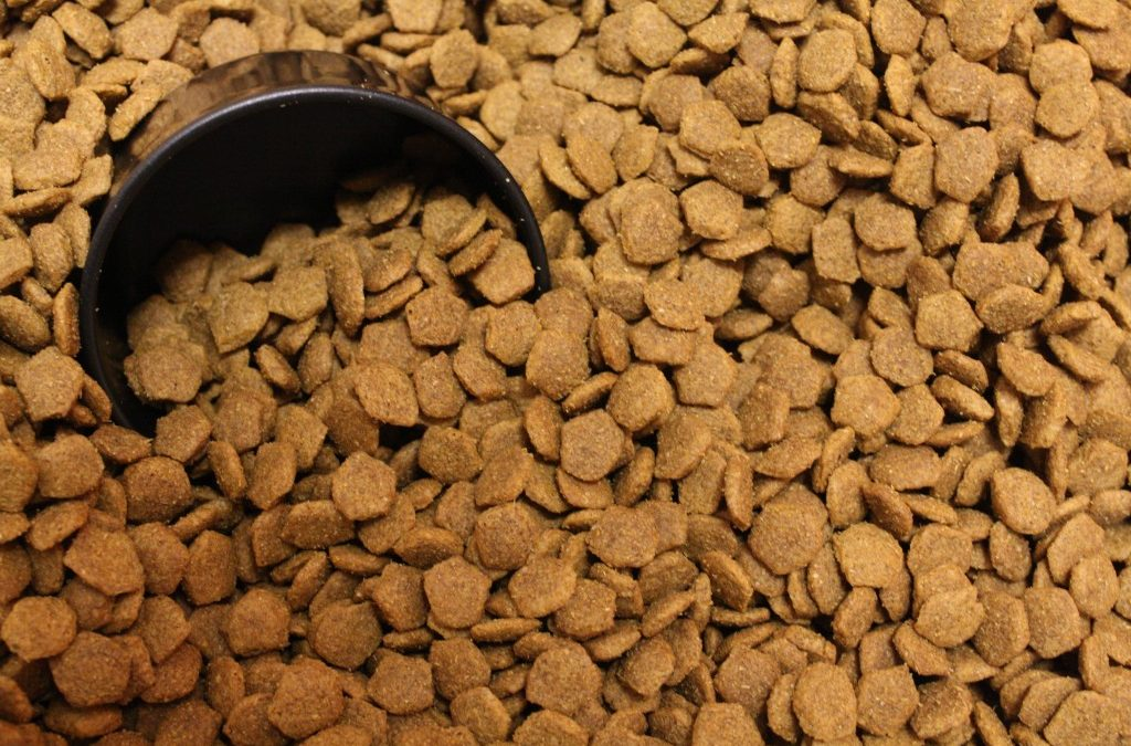 Canned or Dry Food?   Dewinton Pet Hospital