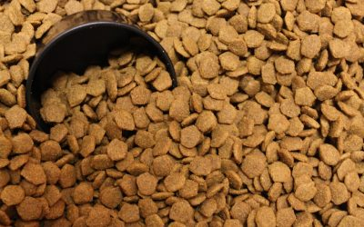 Canned or Dry Food? | Dewinton Pet Hospital