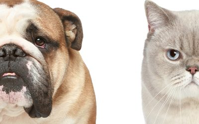 Serious Pet Diseases & Their Treatments | Dewinton Pet Hospital