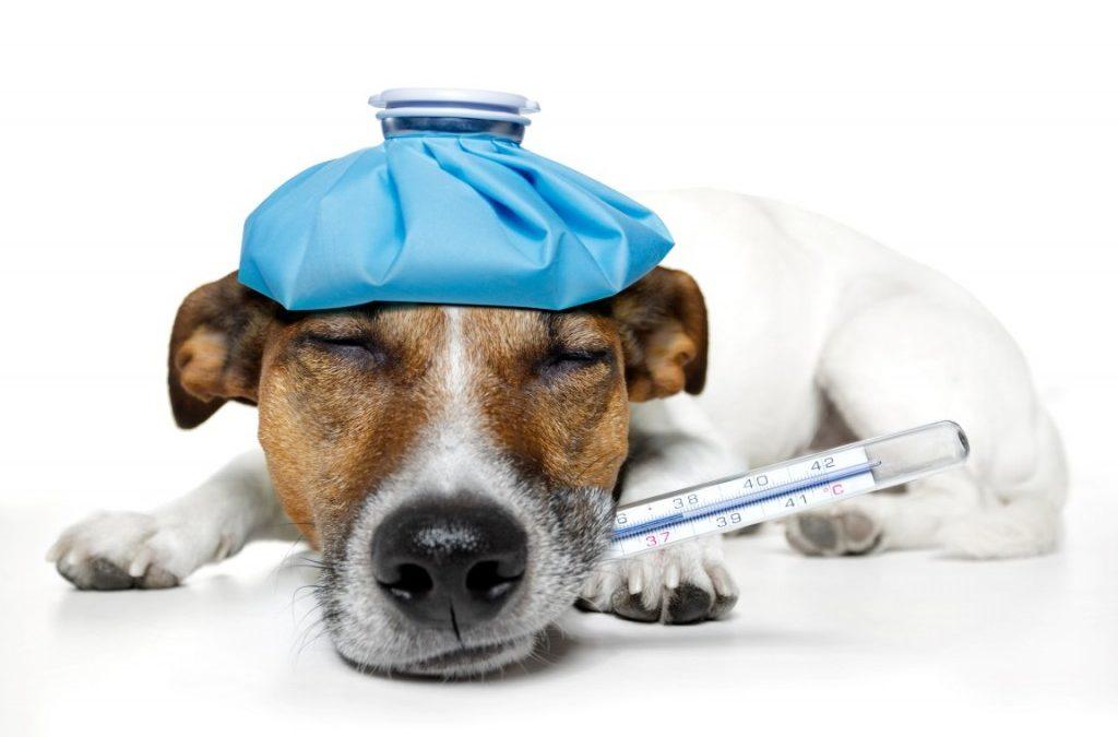 Identifying Pet Emergencies   Dewinton Pet Hospital