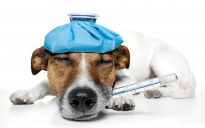 Identifying Pet Emergencies | Dewinton Pet Hospital