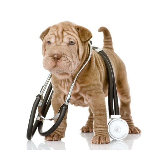 How to Apply Medications | Dewinton Pet Hospital
