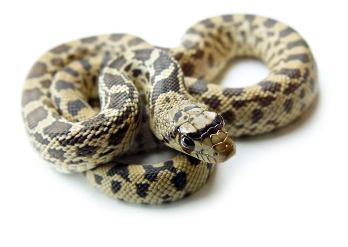Creating the Perfect Snake Enclosure